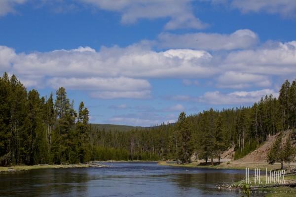 Yellowstone Madison036
