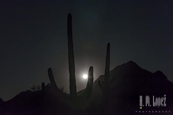 sonoran desert-31
